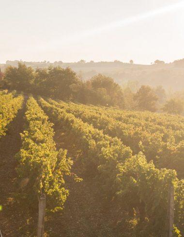 Le vignoble du Gaillac
