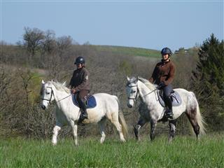 Balade à cheval et atelier équestres