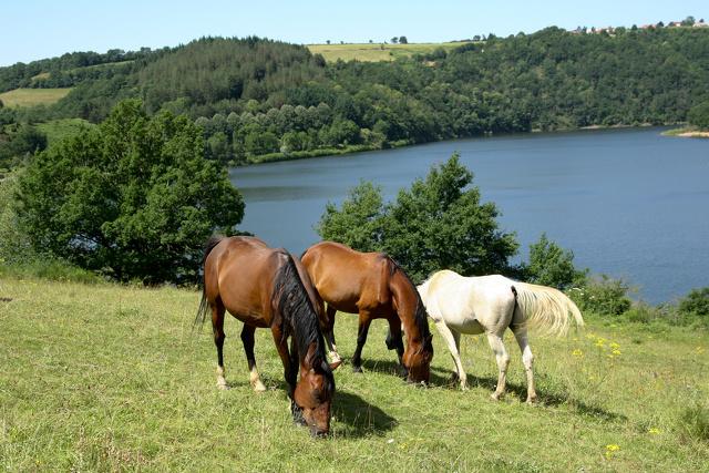 1 Ferme du Lac_Mont Roc