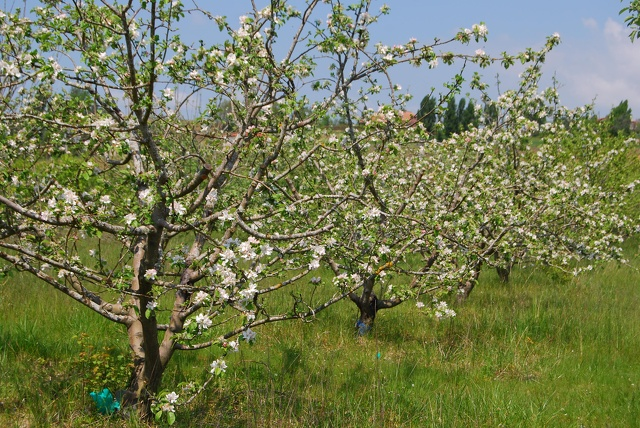 Glacier les fruits de nos jardins_Albi (5)