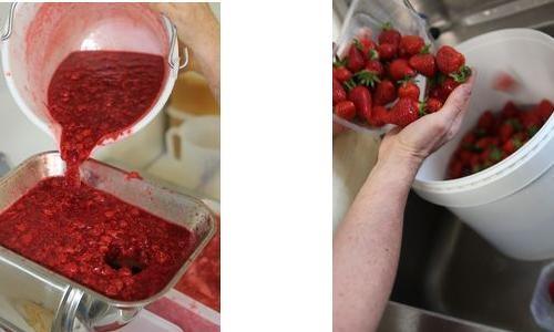 Glacier les fruits de nos jardins_Albi (7)