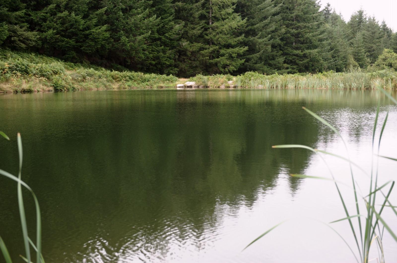 Bassin du Carbonéral