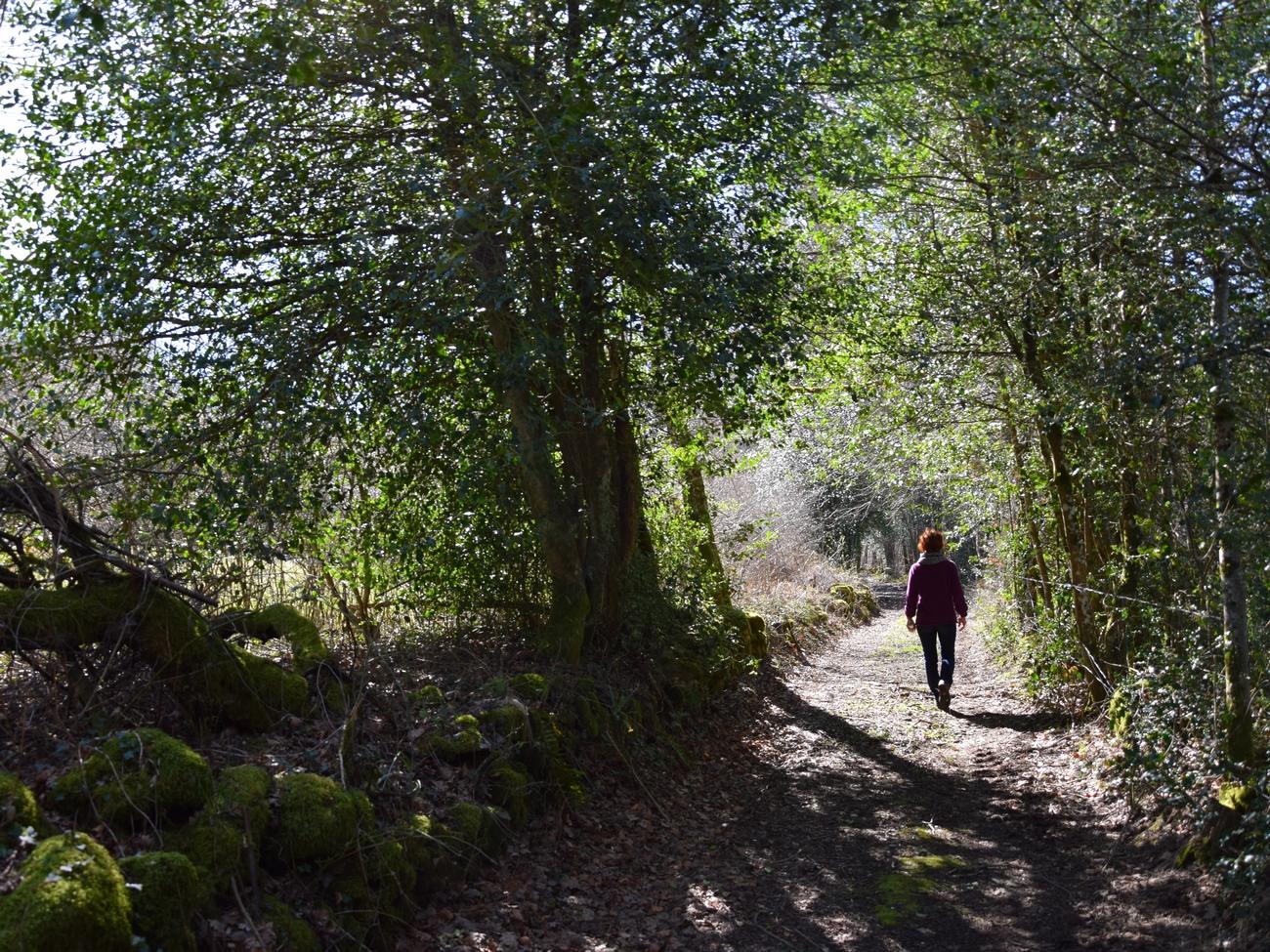 sentier tourbière de Canroute