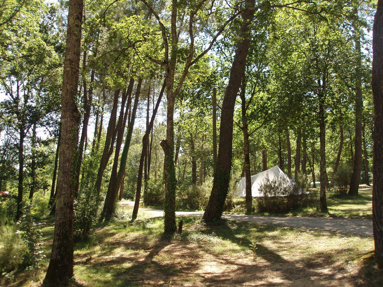 Le Fiscalou Emplacements en forêt
