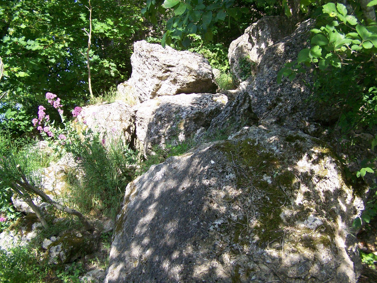 Sentier botanique de la Salette