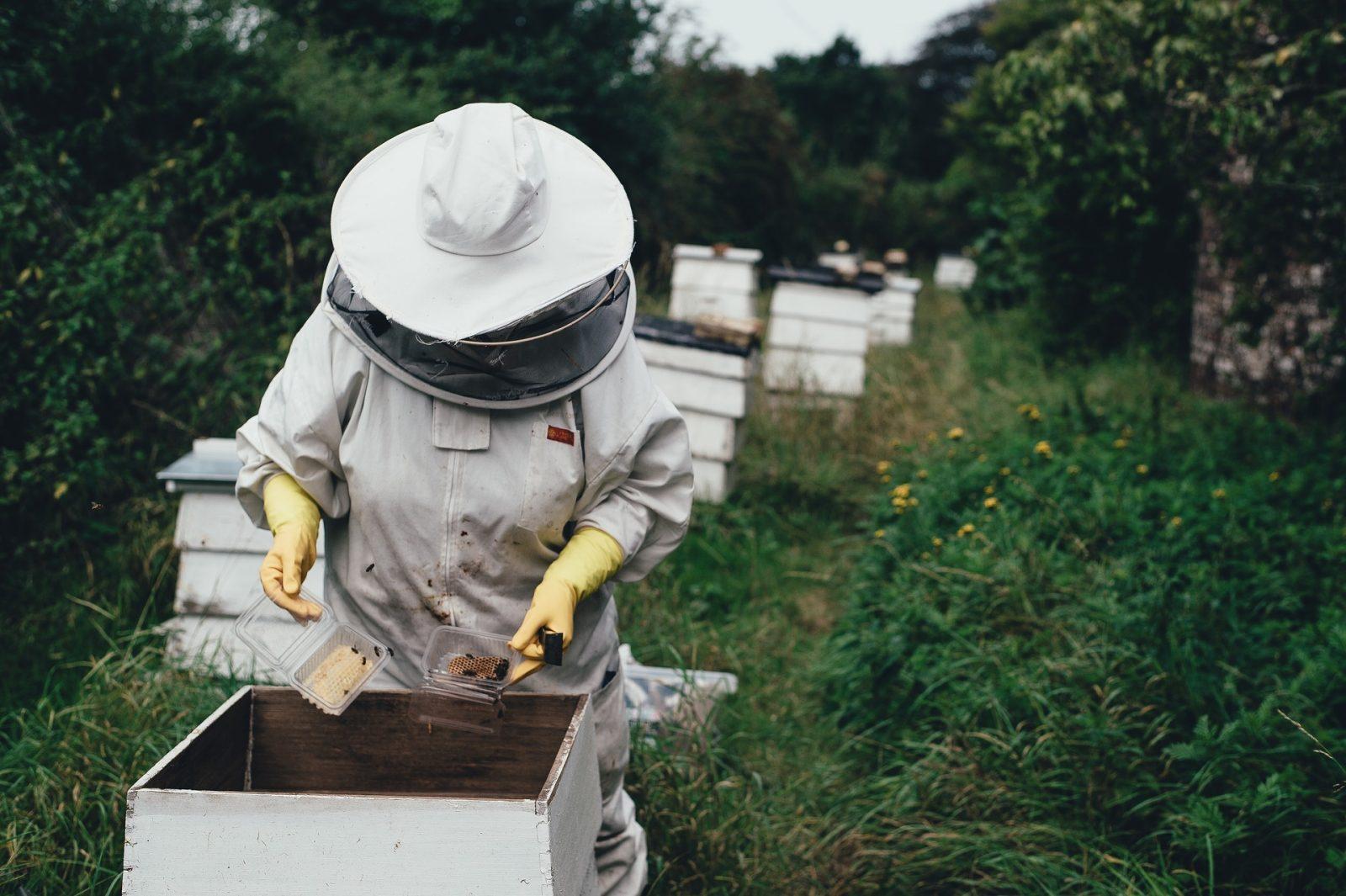Tant qu'il y aura des abeilles – Roquevidal – Tarn
