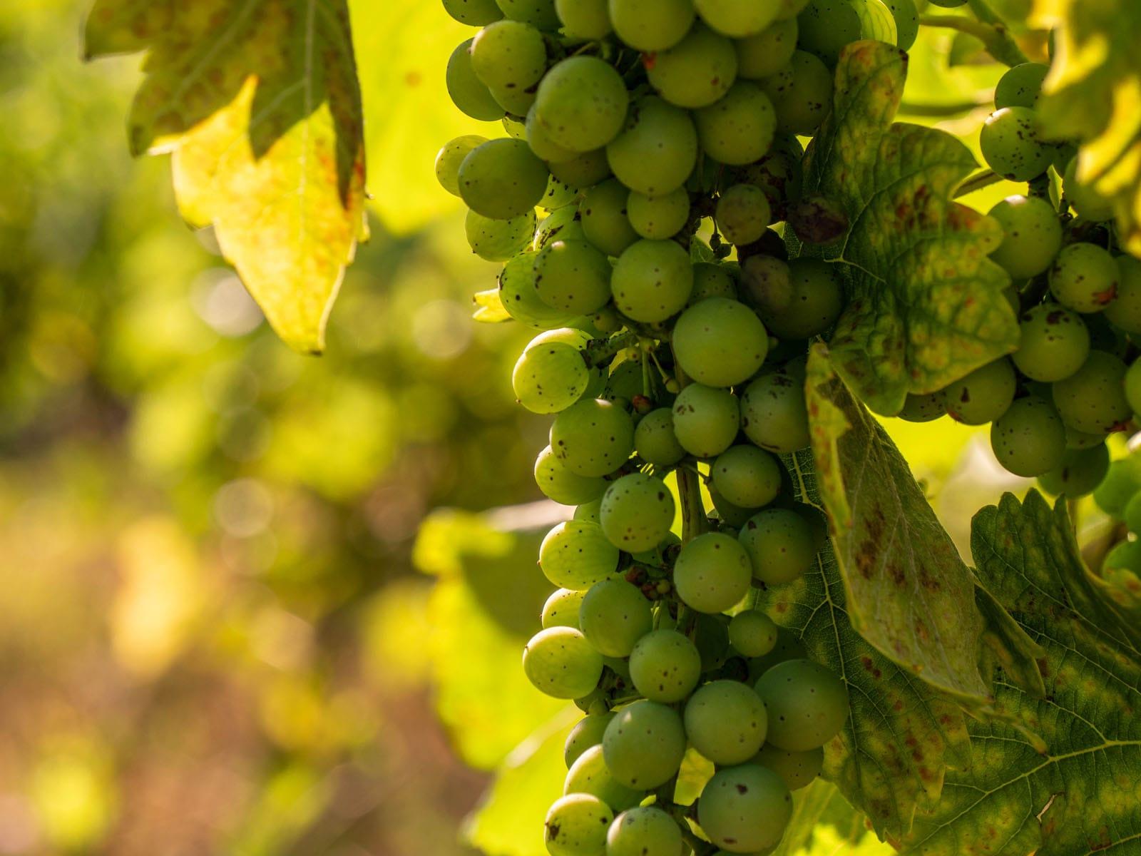 Vacances Tarnaises – 3 jours 100% Vigneron et Dégustation