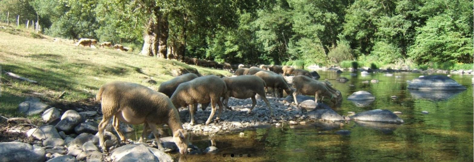 GAEC Moutons