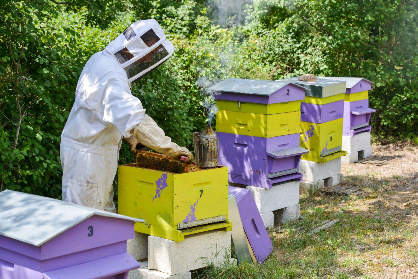 Mathieu Domecq – Les Ruches de Mathieu – Producteur de Miel et magasin apicole à Lavaur – Tarn-Agout – 81