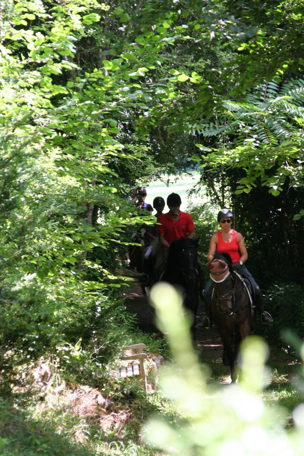 Randonnées à cheval en pleine nature