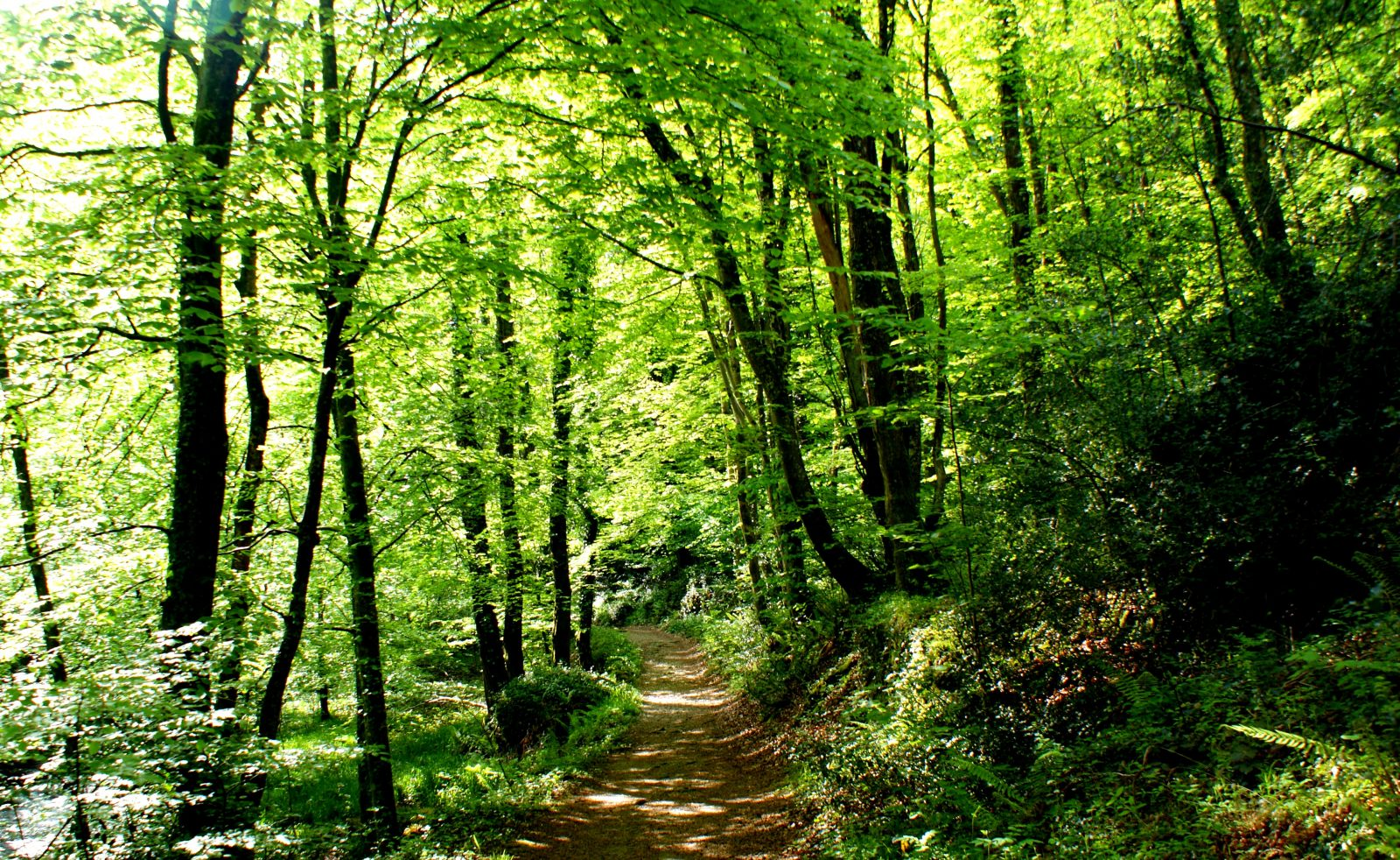 Essence de la forêt