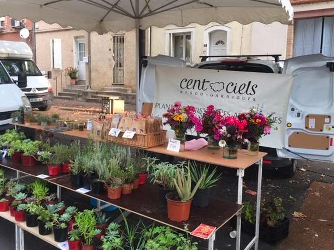 Cent ciels – Plantes aromatiques – Garrigues – Tarn – 81