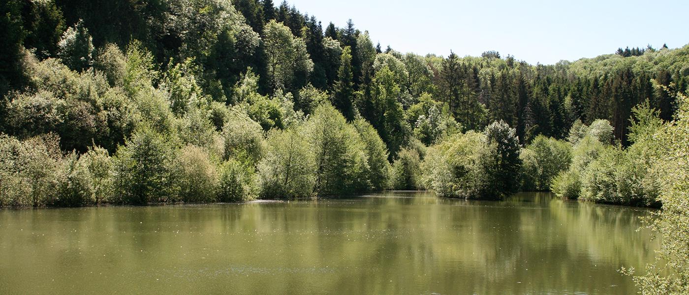 Aire de pique nique  lac de la  Broussonnié