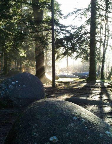 Aire de pique-nique du lac du Merle