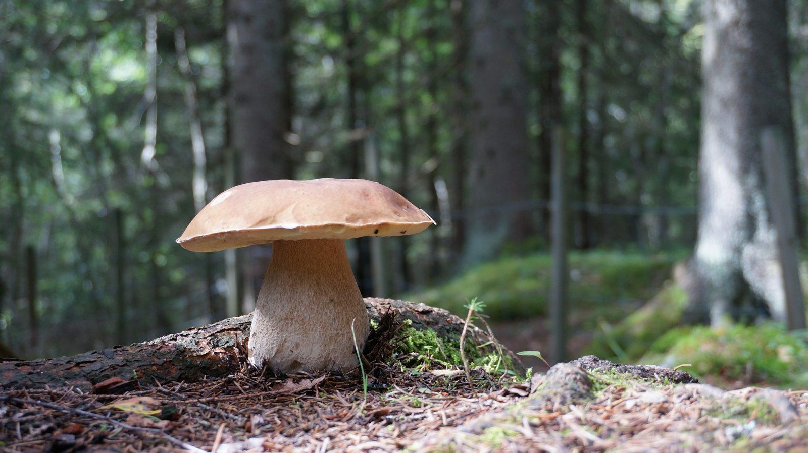 Séjour Nature et champignons