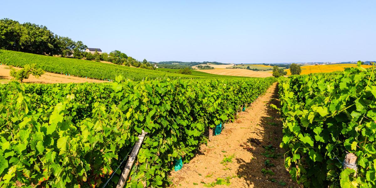 Pass Vigneron au Domaine de Long-Pech