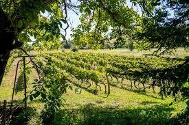 Pass Vigneron au Domaine de La Ramaye