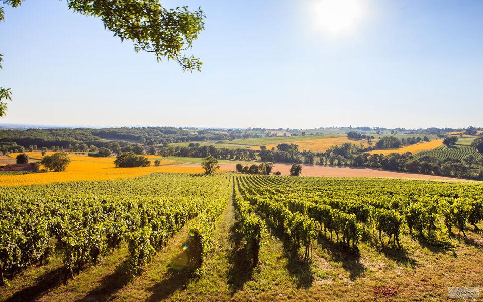Pass Vigneron au Domaine d'Escausses – Château l'Enclos des Roses